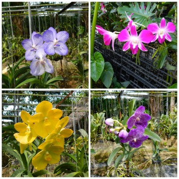 Orchid Farm