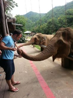 Craig feeds the elephants