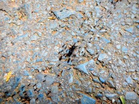 A huge trail of ants at Bang Pae Waterfall