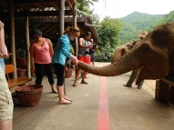 Yay, it's an elephant and I am feeding her ! WOW!