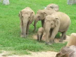 Elephants are free to Roam and enjoy their oasis