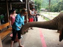 Feeding a beautiful Elephant